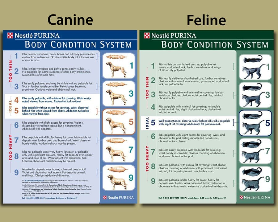 Canine and Feline Pet Body Condition System - Pet Nutrition - Animal Care