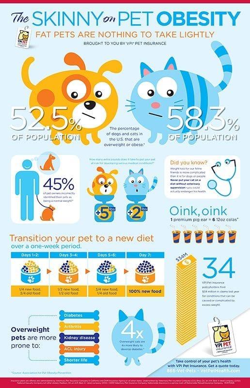 Pet obesity - pet nutrition - pet care