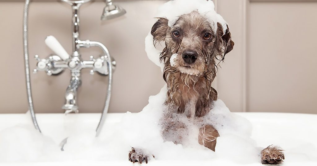 Soapy dog in bath - pet care - grooming - hygiene