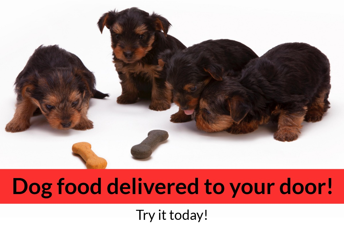 Order dog food online